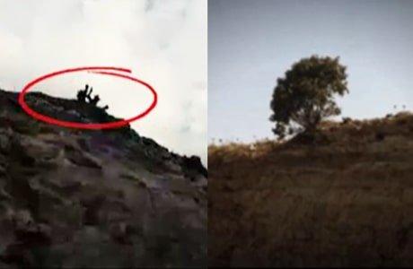 رژیم درختی که  تبدیل به نماد ملی شد را قطع کرد