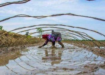 زنان کشاورز ایرانی کارگران ارزان بخش کشاورزی در ایران هستند