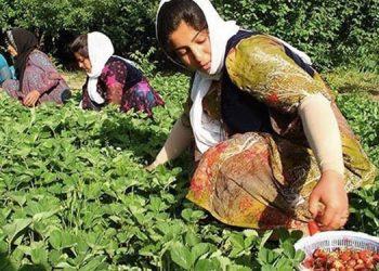 زنان روستایی ایران در سه واژه: رنج، محرومیت و زندگی برده وار