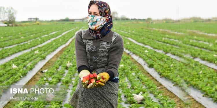 زنان کشاورز در ایران محروم از کشاورزی مدرن، به حاشیه رانده می شوند
