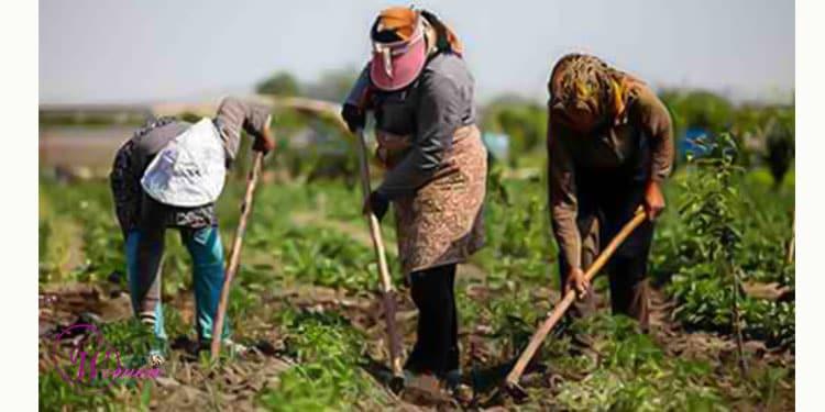 زنان کشاورز در ایران محروم از آموزش مهارت ها