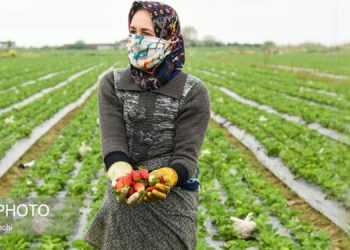 Les agricultrices iraniennes marginalisées et privées de l'agriculture moderne