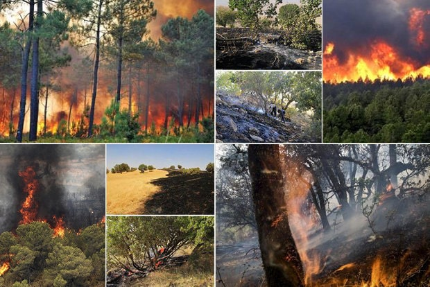 Regime inaction even as fires spread in Iran's ancient forests