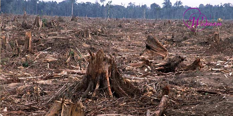 Deforestation and dual desertification