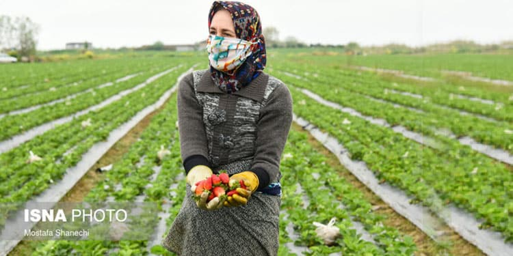Female farmers in Iran marginalized and deprived of modern agriculture