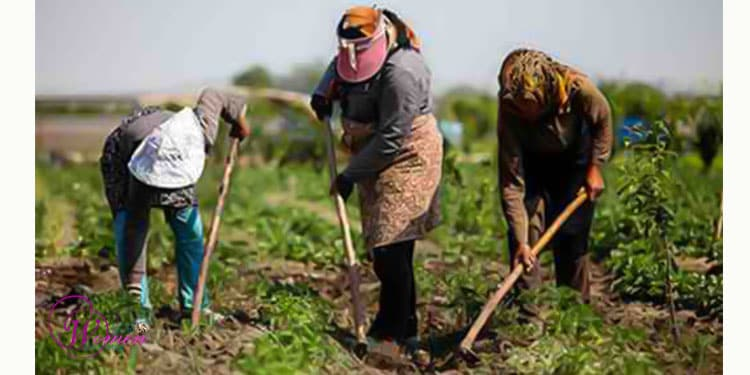 Female farmers in Iran deprived of skills training